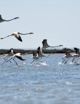 FOTO/Në krye të albumit fotoja e flamingove në Shqipëri, 'The Guardian' sjell pamjet e veçanta nga bota